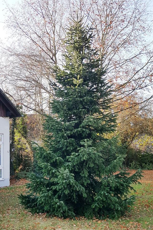 Baumschmücken in Bödingen - Chronik - Heimatverein Bödingen